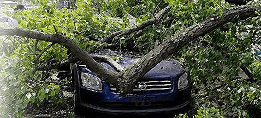 Сгорел автомобиль или упало дерево